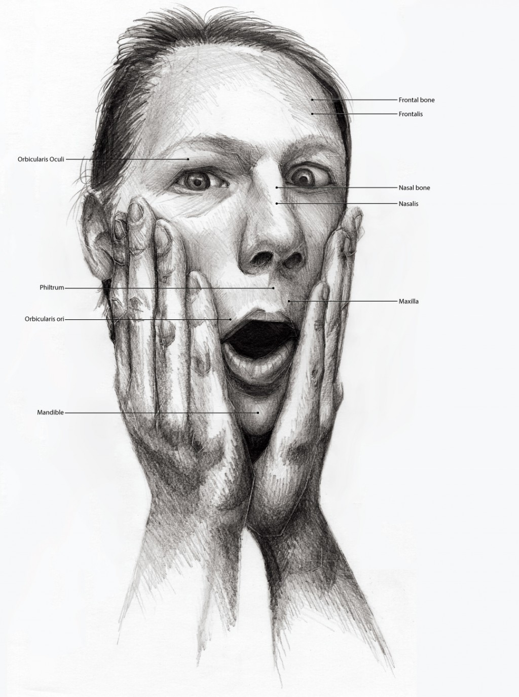 Black and White illustration of someone holding their breath. Anatomical features labeled.