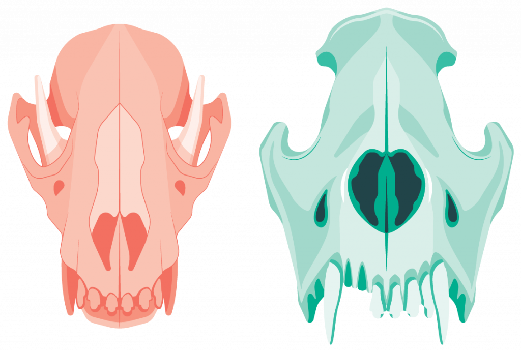 Two dog skull illustrations, Monotone, left one red, right one green. Flat color.