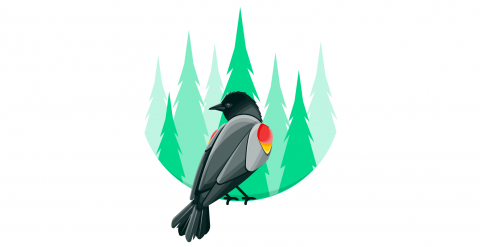 Stylized color illustration of a red winged blackbird sitting on the edge of a round frame with a green pine forest in the background.