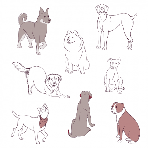 Sketches of dogs. Line art and full color.